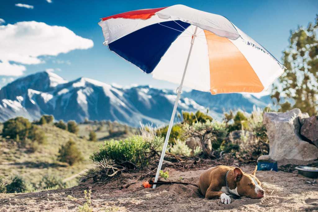 dog under umbrella