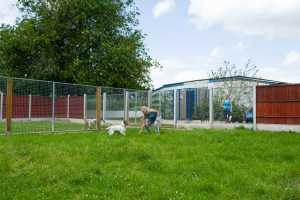 dog kennels garden