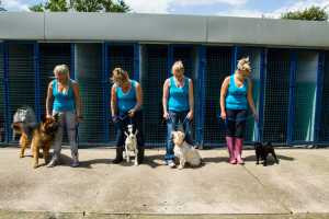 dog kennels and trainers