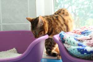 cat in cattery