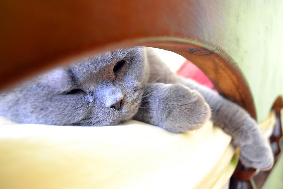 cat-1687165_960_720