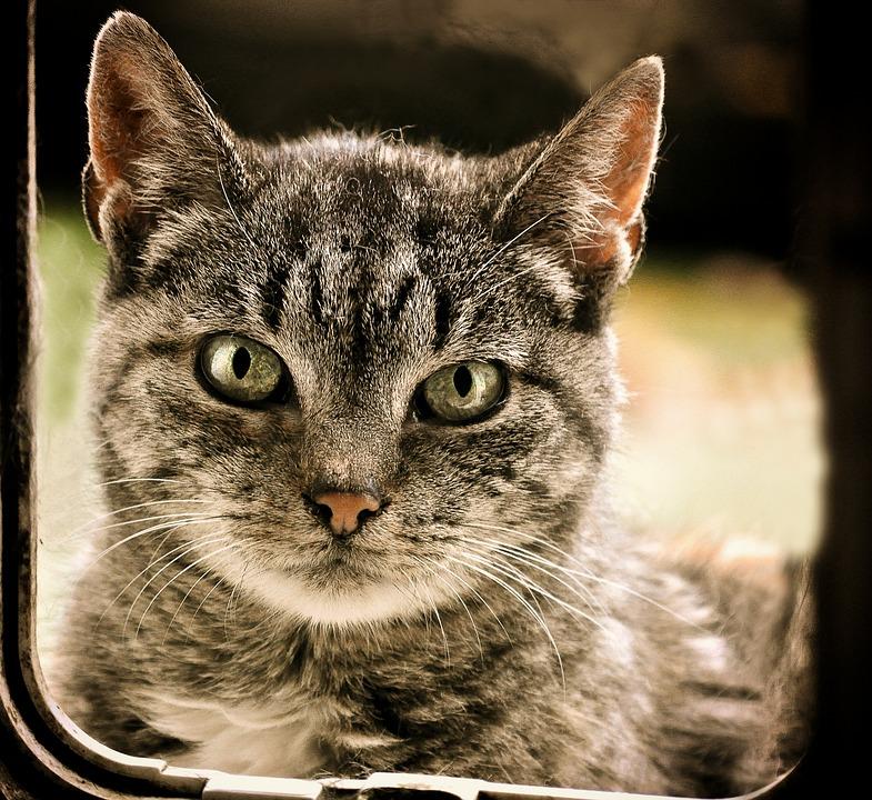 cat-2790545_960_720