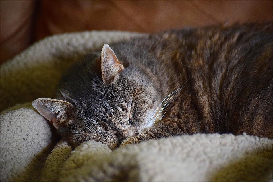 cat-2203949_960_720