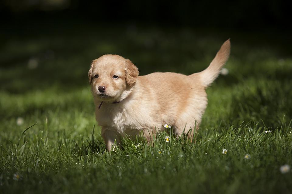 dog-3033950_960_720