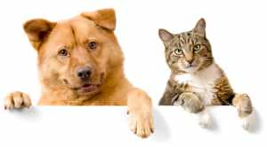 Dog and Cat